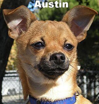 Adopt Austin at k-9pals.org