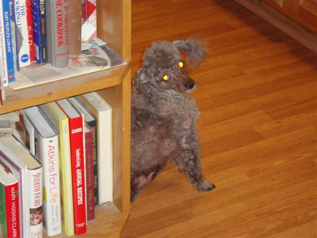 Tana, our spoiled rotten little poodle girl child