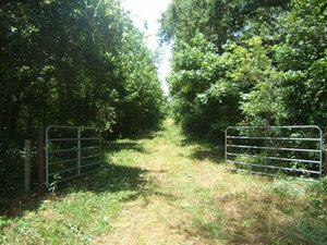 Hunting Land For Sale In Marshall County Mississippi