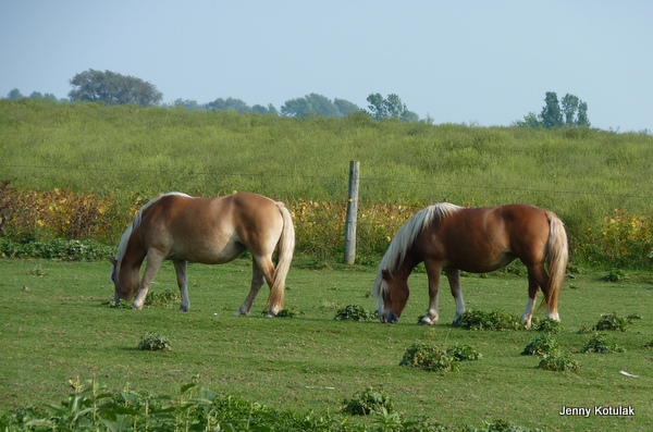 Back roads Ontario, Ontario farms, Jenny Kotulak photo, Ontario horses, Horses grazing