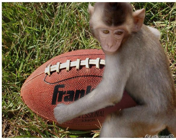 monkey playing football