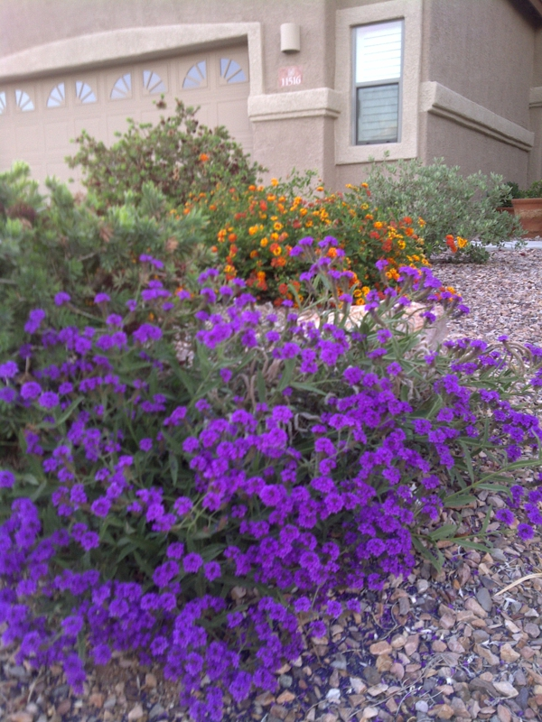 Taking a Walk Among Spring Blooms in Marana