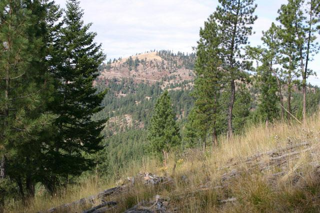 Montana Mountain Properties