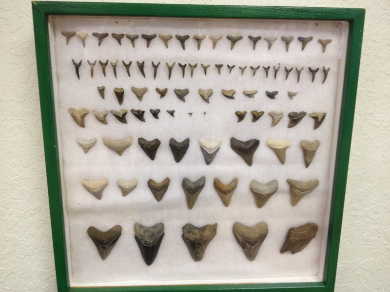Shark Tooth Art And Craft In Venice Fl