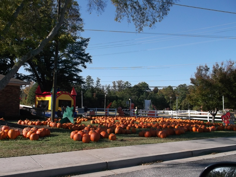 Pumpkin Patch Roswell Georgia 2