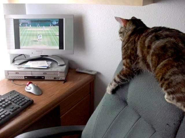 Zoey the Cool Cat watching Wimbledon Men's Double Finals