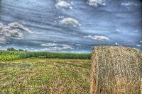 Corn farm HDR