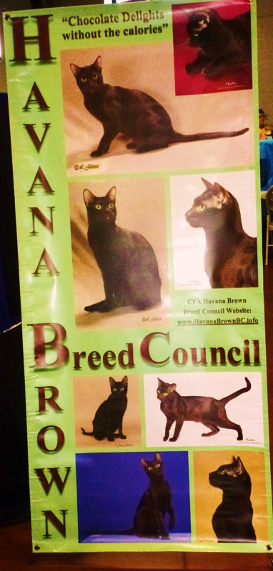Pikesville Cat Show 2012