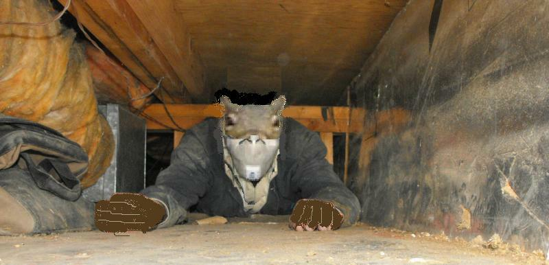 how to get rid of rats in crawl space