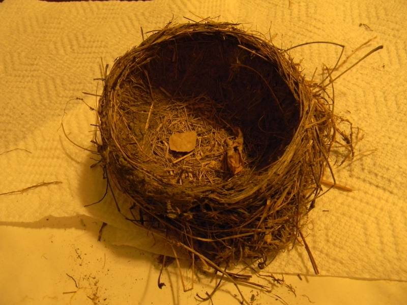 how to keep birds from building nests on your house