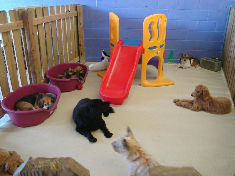 Cleverdog great dog day care center in silver spring md for Best doggy day care