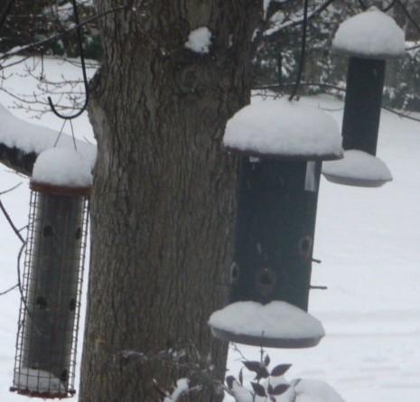 3 full feeders HomeRome 410-530-2400