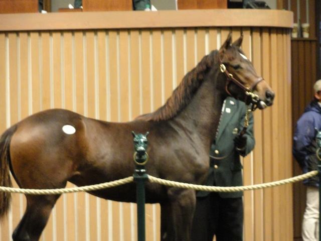 A beautiful colt sold at Keeneland Auction November 10,2011