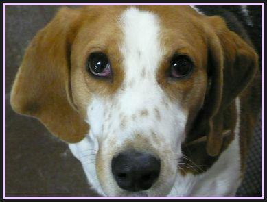 Haywood County Nc Animal Rescue Foundation Sarge S