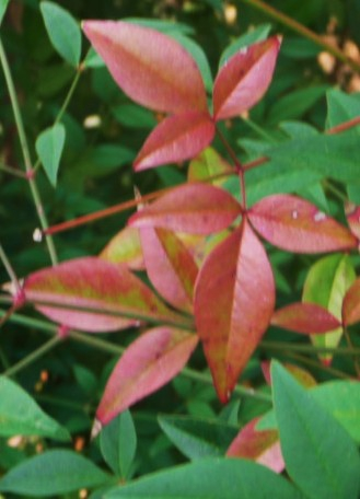 Fall Leaves HomeRome.com