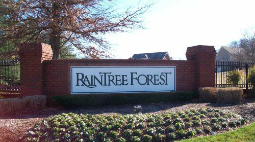 Raintree Forest