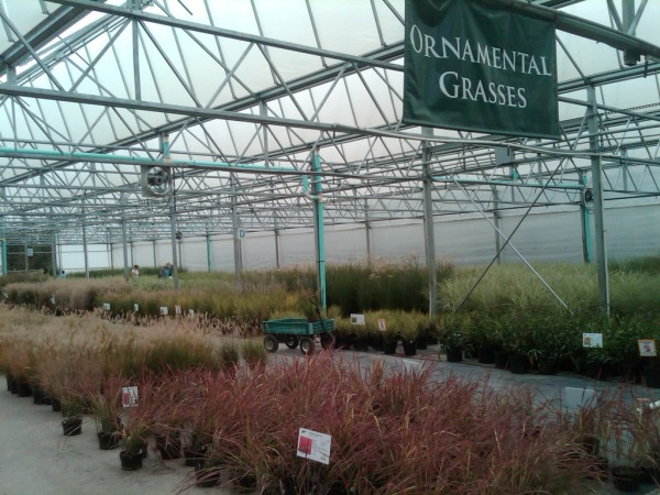 Natorp's Nursery Outlet Sale