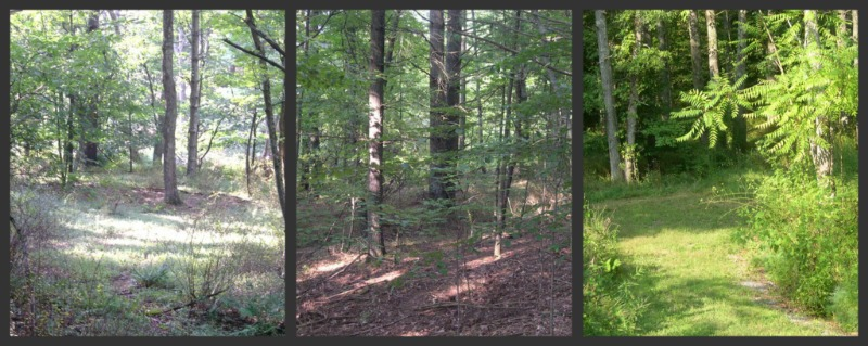 land for sale in Lewisburg WV