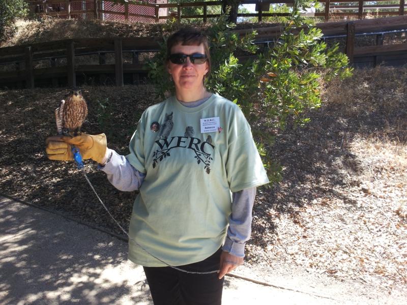 WERC educational merlin falcon