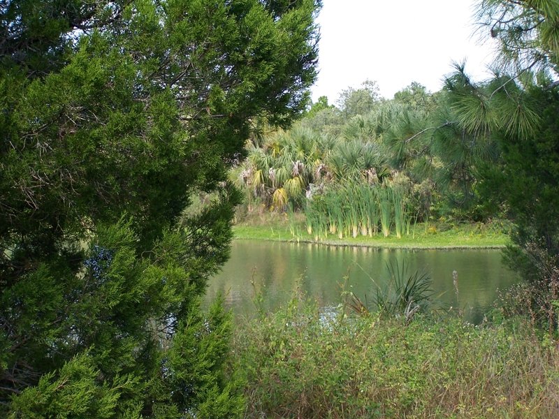 Wall springs park palm harbor florida for Do you need a fishing license on a pier