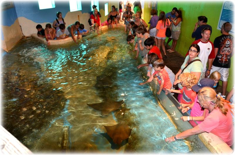 Clearwater Marine Aquarium - Clearwater, Florida