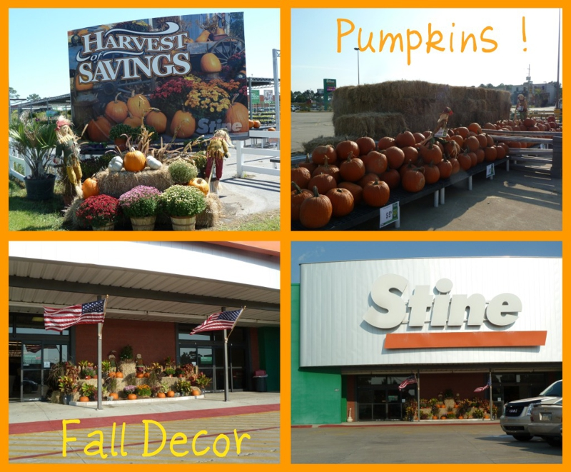 Stine Store Pumpkins in Lake Charles