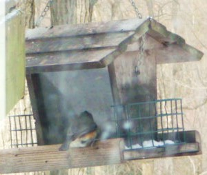 Bixler Church Bird Feeder HomeRome 410-530-2400