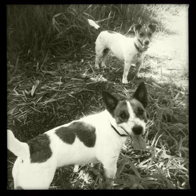 Tuesday's Treasures - Kona girl meets little brother Bandit in Haiku Maui