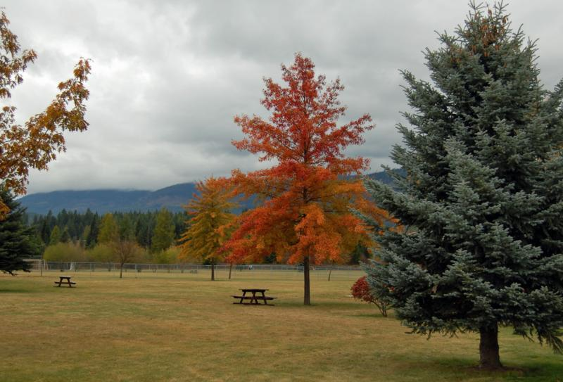 SANDPOINT FALL by KENT ANDERSON
