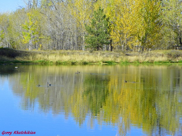 Fall colors (ducks and reflection included) in Roberts, Montana