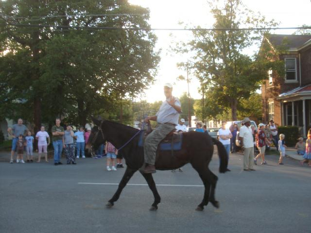 Black mule in Festival of the Horse Grand Parade