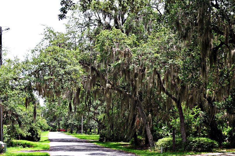 holiday woods kissimmee florida homes for sale