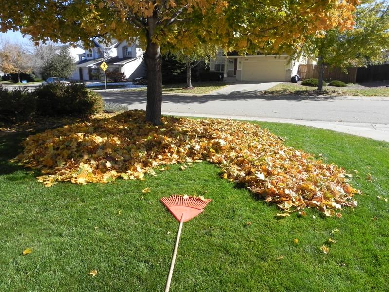 Piles of leaves
