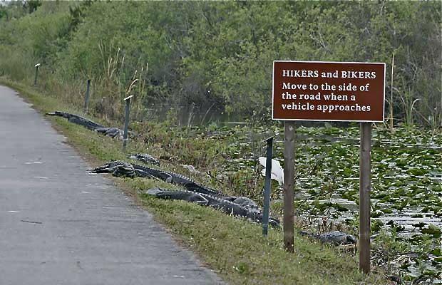 La Road Sign