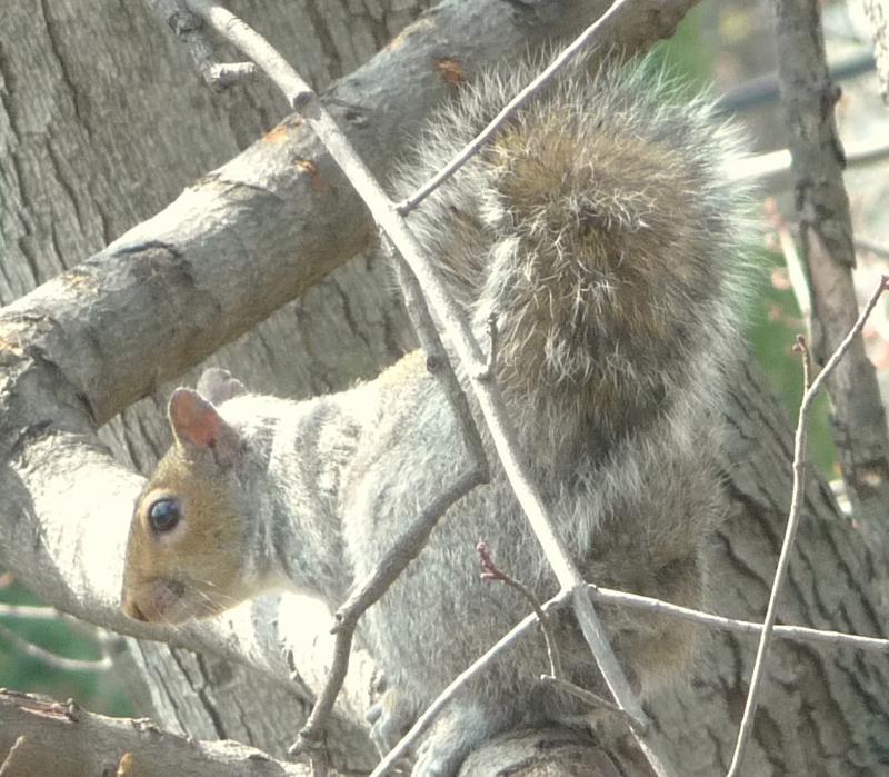 squirrel ..HomeRome 410-530-2400