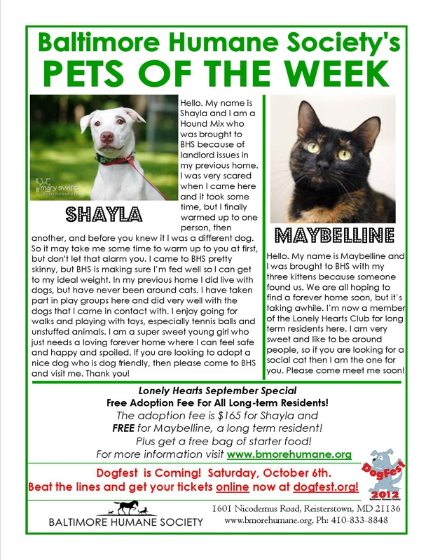 Baltimore Humane Society Pets of the Week