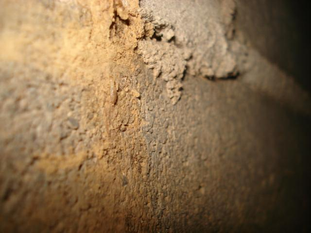 Kentucky Home Inspector termites