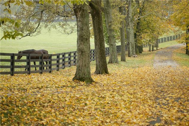 Kentucky Horse Farm Nicholasville KY - Jessamine County - Horse Farms For