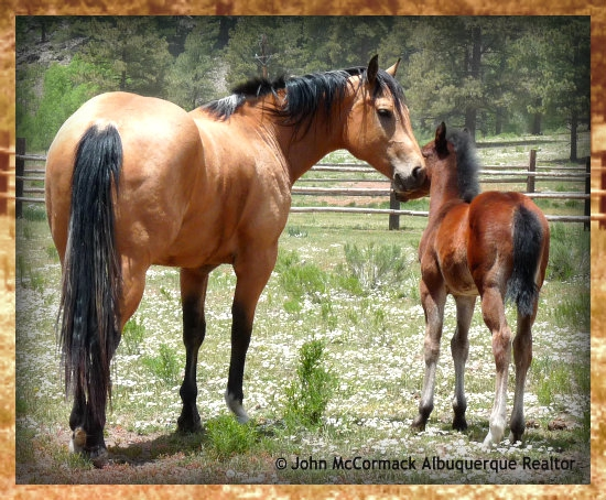 Protecting, NM, Equine, horse, abuse, neglect, animal protection, john mccormack, realtor, albuquerque, rio rancho, albuquerque homes realty