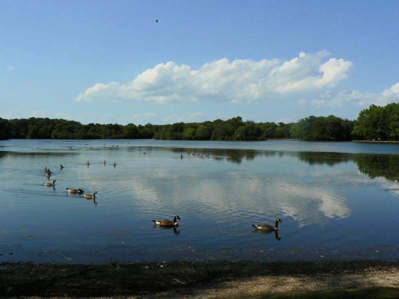 Belmont Lake State Park North Babylon Long Island Ny
