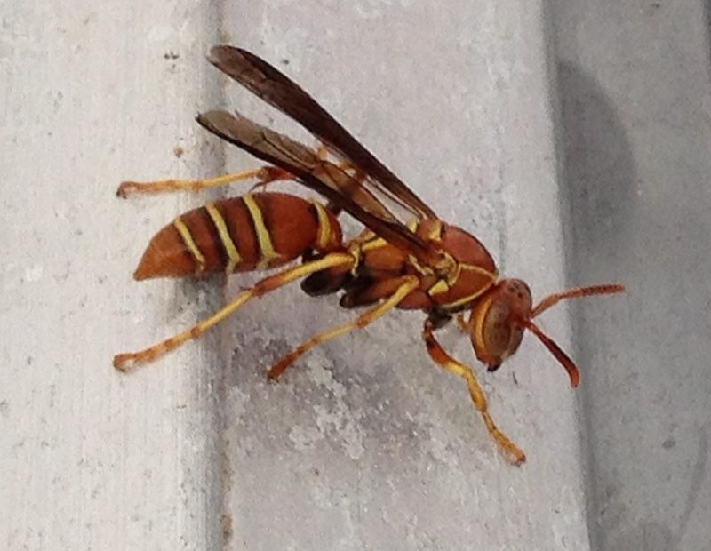 Sw Fl 6 Common Pests Found In Home Inspections