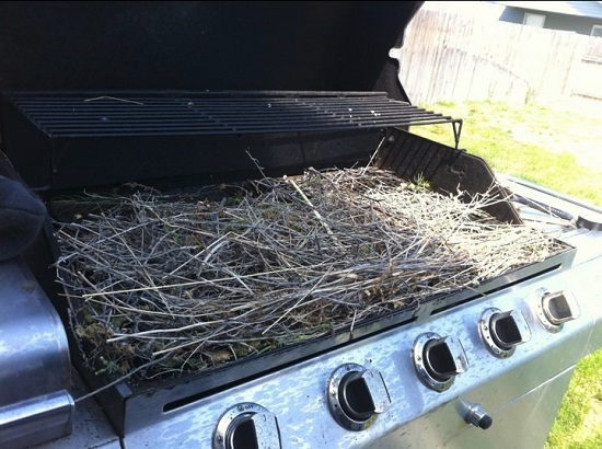 bird's nest on a barbecue