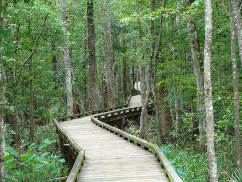 Trail to Black Creek