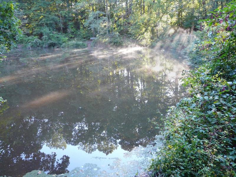 Hidden Pond Nature Center Springfield Va