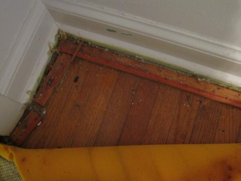 Hardwood floor under carpet carpet vidalondon for Wood floor under carpet