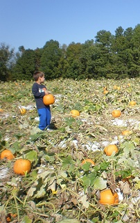 Fall things to do in Raleigh | Pumpkin Patches Raleigh | Places with Pumpkins Near Raleigh