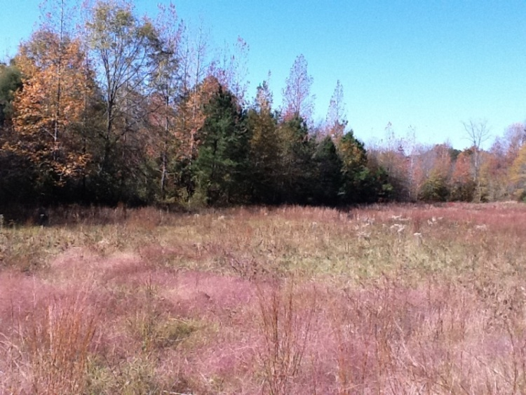 New Listing 41 Acre Homesite For Sale In Ralph Tuscaloosa County