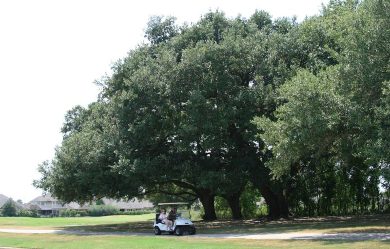Windrose in Spring TX a master planned community