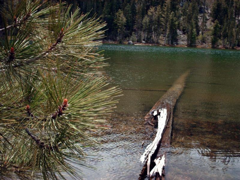 Northern california ranch and land lake property for Lake shasta fishing