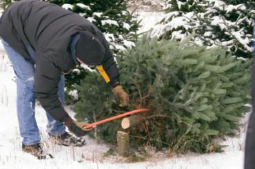 cutting christmas trees illinois